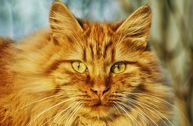 Macskás blogok