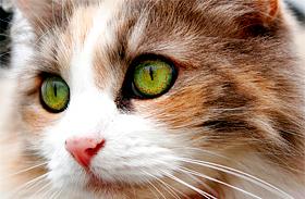 Macska dorombolás gyógyít