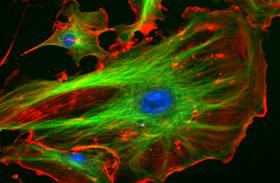 Mikroszkopikus fotók az emberi testről