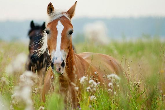 A ló az ezotéria szerint asztrális képességek hordozója, kultúrákon átívelően az erő és a hatalom szimbóluma. A gyógyítást illetően a ló fiziológiai és pszichológiai értelemben is jótékony hatással bír. A lovaglás során az egymással érintkező ember és ló szavak nélkül is kommunikál, ami olyasféle összpontosítást kíván meg, akár a meditáció. Fogyatékkal élő, sérült emberek életminőségének javításában is jó segítség a gyógylovaglás. A lovaglás a reflexek és az izomzat fejlesztője, gyermekek esetében különösen jól alkalmazható e célból. Az izomtónust is javítja, illetve hatékony kezelője a sclerosis multiplexnek.
