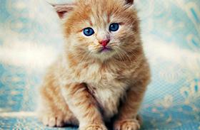 Macska álomfejtés