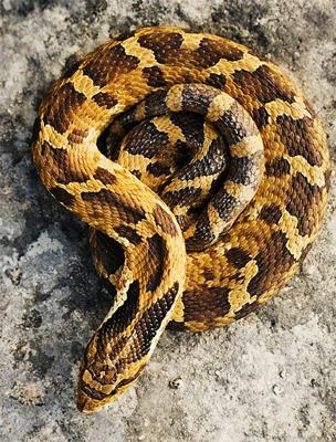 A Kígyó életét átitatja a spiritualitás