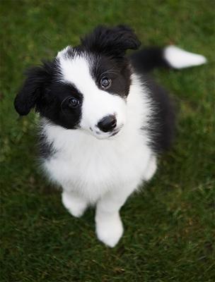 A Kutyát minden érdek nélkül sokan szeretik