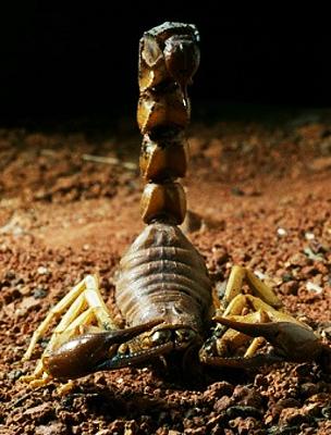 A Skorpiót a kihívások éltetik