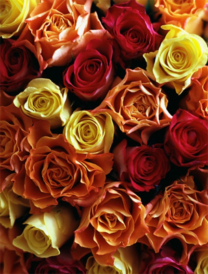 A Rózsa mindig kiáll a szeretteiért