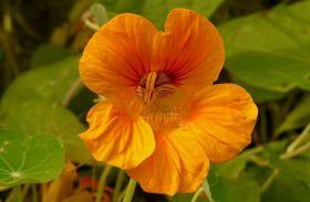 Fogyasztó kerti virágok