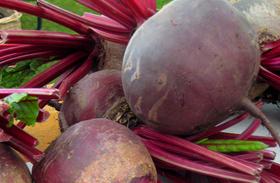 5 nap, 3 kiló - Béltakarító őszi zöldségkúra