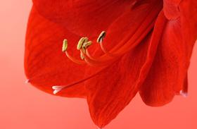 Képek! 10 veszélyes mérgű növény, mellyel bárhol találkozhat a gyerek