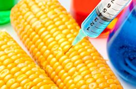 Génmódosított élelmiszerek
