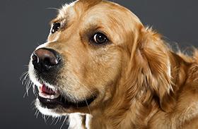 Kutya kikötése bírság