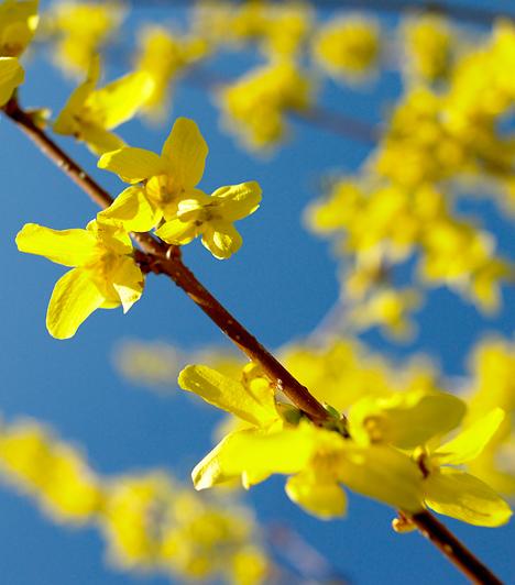 A 10 legszebb tavaszi virág