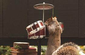 Bulizó mókusok
