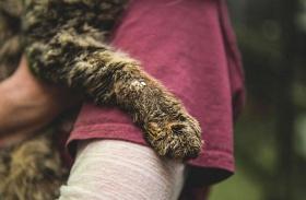 Cica megmentése - Első ölelés