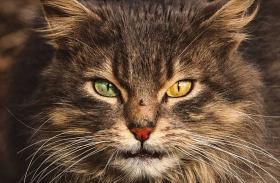 Kóbor macska fotók