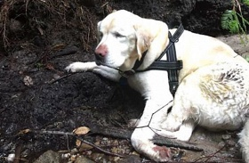 Megmentett vak kutya