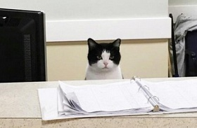 Oreo, a macska idősek otthona