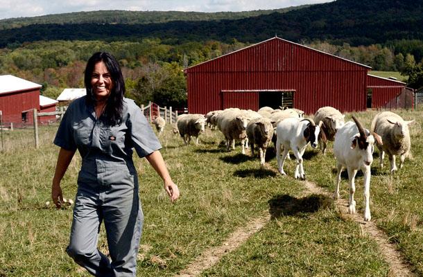 Tracey a menhelyként üzemelő farmon