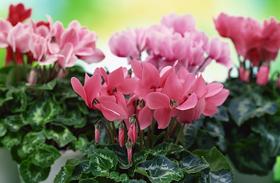 14 alig ismert praktika a dús, egészséges, csodaszép növényekért