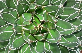 3 igénytelen növény, amit elég néhány hetente locsolni