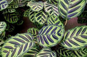 4 igénytelen, de álomszép növény sötét lakásokba