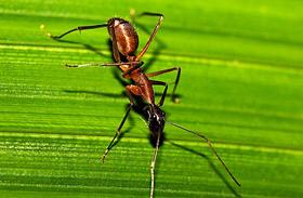 A legjobb házi praktikák csótányok és hangyák ellen - Így űzd el őket végleg