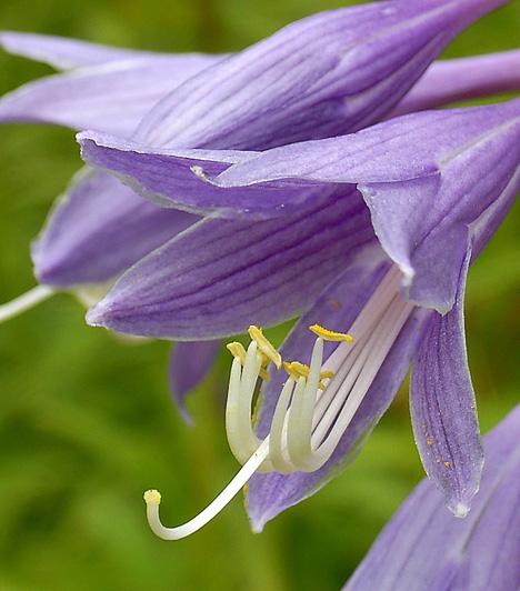 15 csodálatos növény a balkonra