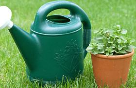 A dús, egészséges szobanövények 4 titka