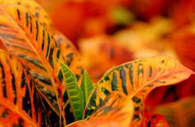 Fűtést rosszul tűrő növények