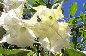 3 könnyen tartható, gyönyörű növény a balkonra