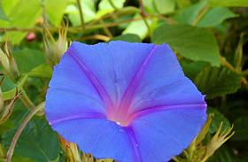 4 csodás, könnyen kezelhető, októberig virágzó növény