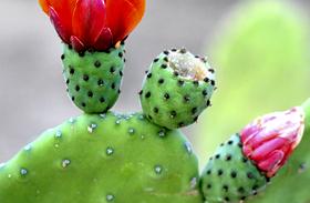 Növények káros sugárzás ellen