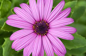 3 egész nyáron virágzó, gyönyörű növény a balkonra