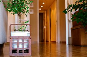 Penész a szobanövényeken