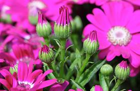 Szerelemhozó, virágzó szobanövények sötét lakásba