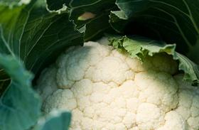 A 4 legjobb rakott karfiol recept