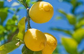 3 C-vitamin-bomba étel ráncok ellen - Egyik sem több mint 300 forint
