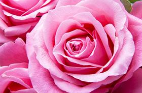 Rózsavíz házilag