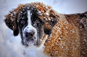 Állatok a hidegben
