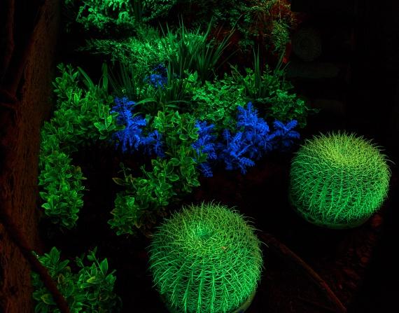 A viaFlora Csoport szakmai vezetője, Kun Richárd által kifejlesztett sötétben világító virágok rövid idő alatt óriási karriert futottak be. A koncepció 2014-ben merült fel ötletként, amit kemény munka és kísérletezgetés követett, míg végül megszületett a 100%-ban növényi eredetű, génmanipulációtól mentes, a környezetre, az emberekre és minden más élőlényre veszélytelen anyaggal kezelt világító virág.