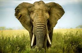 Így alszik az elefánt