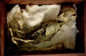 Furcsa csontvázak