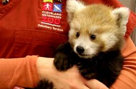 Képeken minden idők 10 legcukibb állata - Világhírre tettek szert