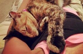 A kétarcú macska