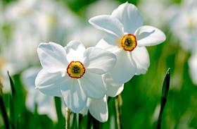 Mikor jön a tavasz?