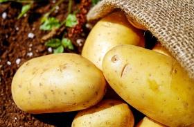 Milyen volt a krumpli?