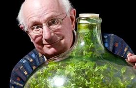 Növény a palackban