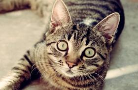 Vicces macskás képek