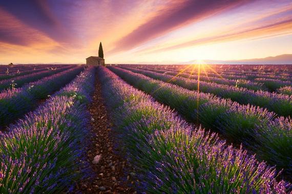 Mintha meseszép festményen lennének megörökítve a franciaországi Provence híres levendulamezői.