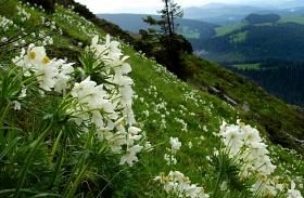 Bihar-hegység
