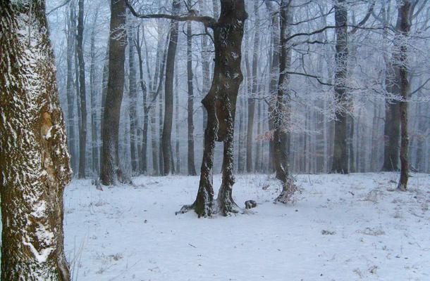Téli csend a Börzsönyben